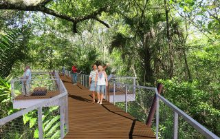 20' high canopy walkway weaving through cypress forest.